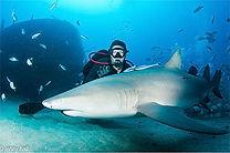 Tyler Mahler sharks.jpg