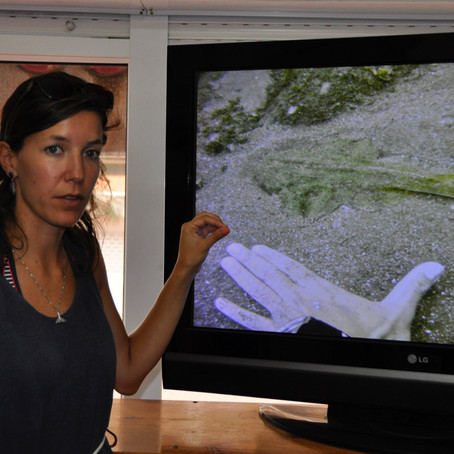 Meet Angelshark Biologist Eva Meyers