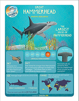 Gerat Hammerhead Infographic for kids.jp