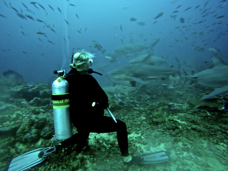 Shark Week: Meet Biologist Lindsay Graff