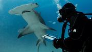 Great Hammerhead Shark Science with Vital Heim
