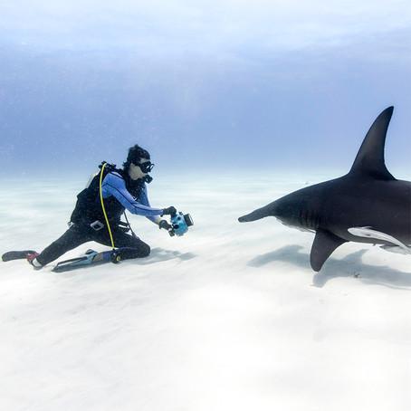 Meet Shark Advocate Mike Coots
