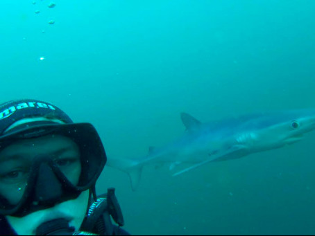 Shark Week: Meet TV Presenter & Conservationist James Glancy