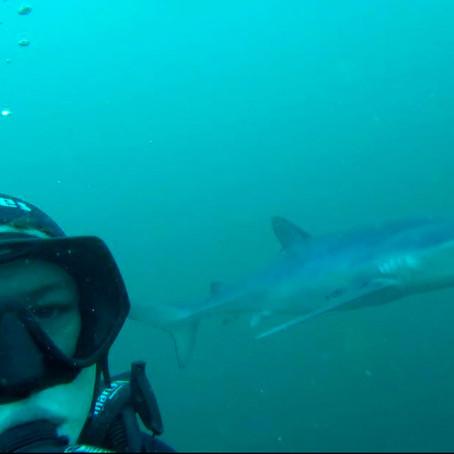 Shark Week: Meet TV Presenter & Conservationist James Glancy