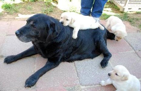 rosie_with_pups_9_2010-422x274.jpg