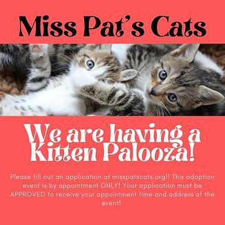 Miss Pat's Cats Kitten Palooza.jpg