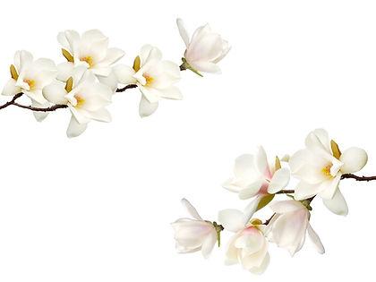 Magnolias.jpg
