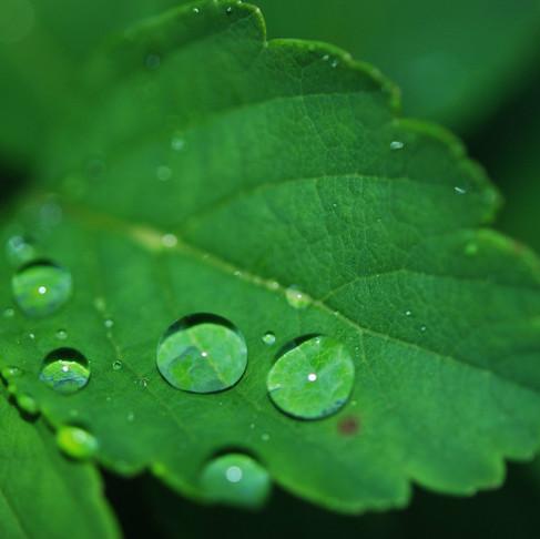 Anti-inflammatory Properties of Chlorophyll: The TNF-α Gene