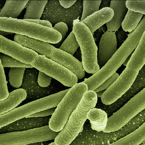 Impact of Chlorophyllin for Antimicrobial Resistance
