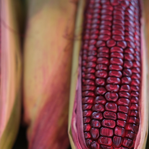 Purple Corn Extract and Its Effects on Blood Pressure