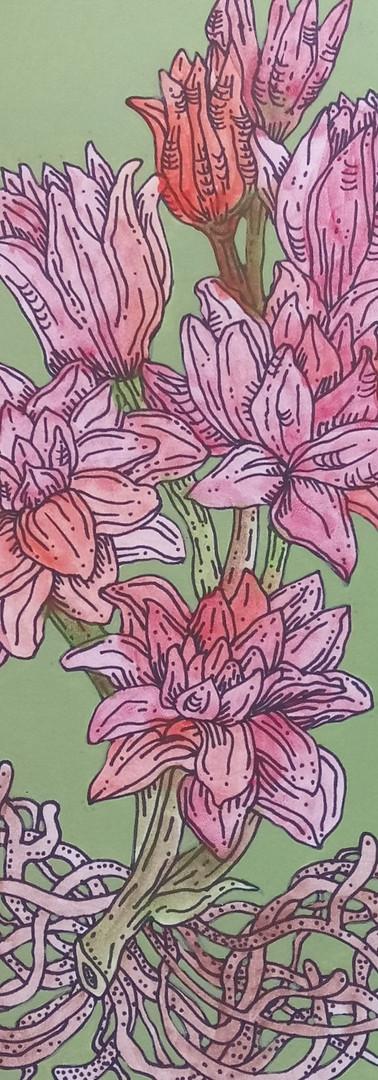"UNAVAILABLE/ON HOLD  - ~18x12"" Botanical Illustration #4"