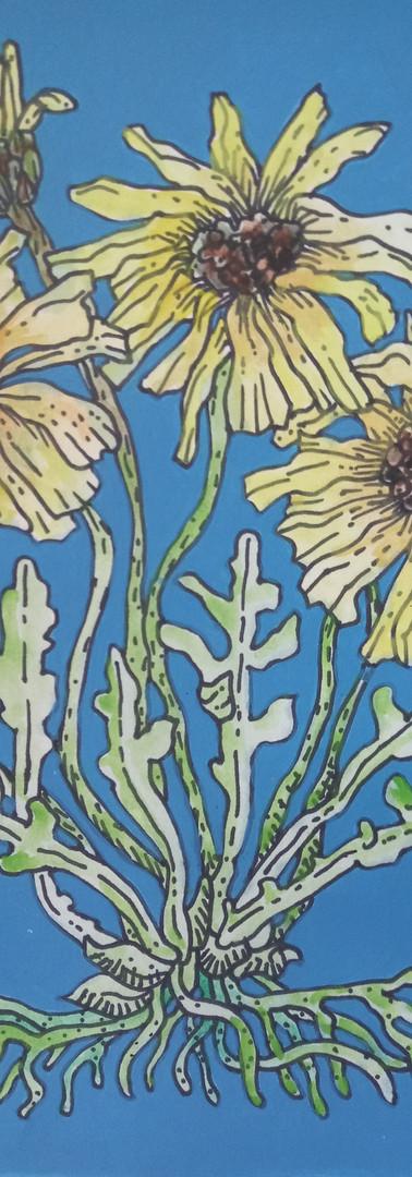 """Available - ~12x9""""Botanical Illustration 3"""