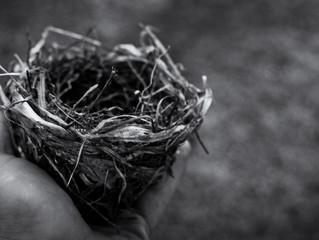 Birth & Bereavement