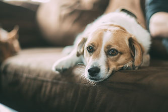 Pet, Cat, and Dog Odor Removal