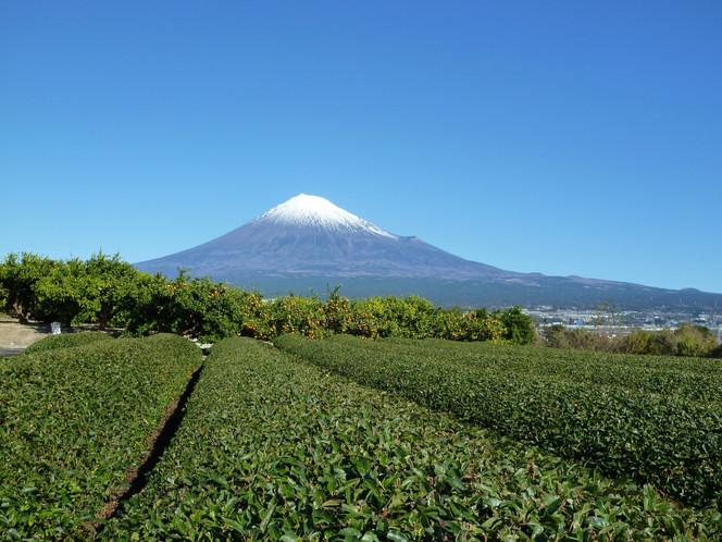 【ご報告】今年度より静岡県知事戦略局広報アドバイザーに着任