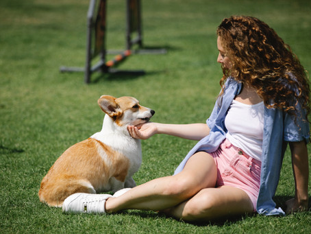 Comment prendre soin de son chien en été