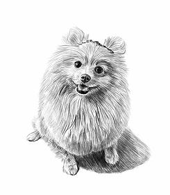 chien au crayon.webp