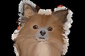 chihuahua vectoriel.png