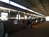 Freshford Equestrian Centre Horse Stable Agistment