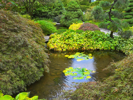 Middletown, CT | Pond & Water Feature Contractor | Pond Design & Construction Near ME