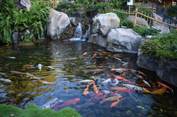 Outdoor Koi Pond & Waterfall Project in Westbrook, CT