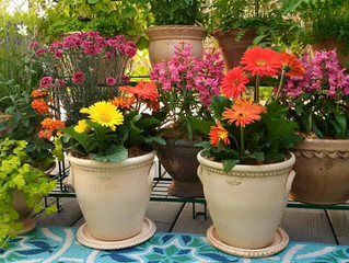 Flowerpots at Home in Michigan