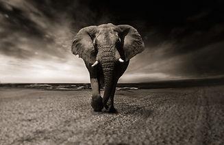 elephant-2870777_1280.jpg