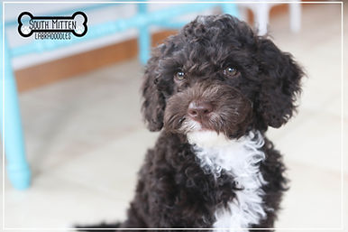 mocha puppy with logo.jpg