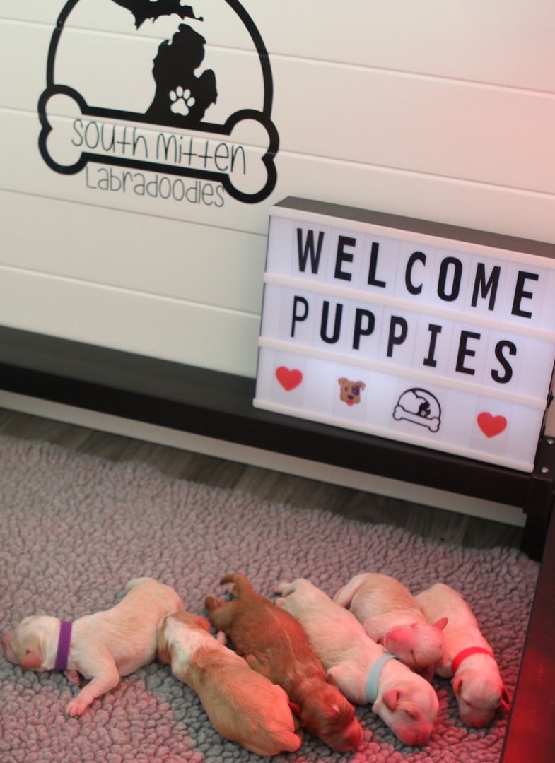 Welcome sweet puppies!