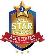 South Mitten WALA Star Logo-0819-00905.p