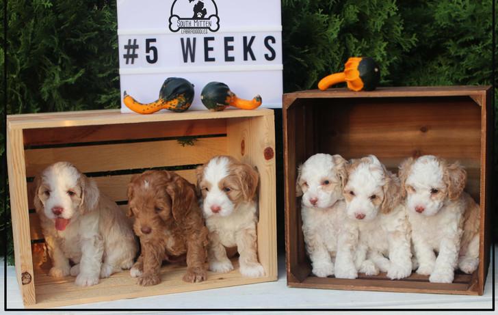 5 week litter .jpg