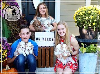 6 week group puppies.jpg