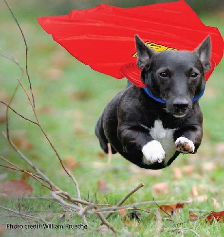 super-dog narrow.jpg