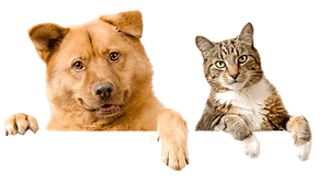 dog_and_cat_1_2.png