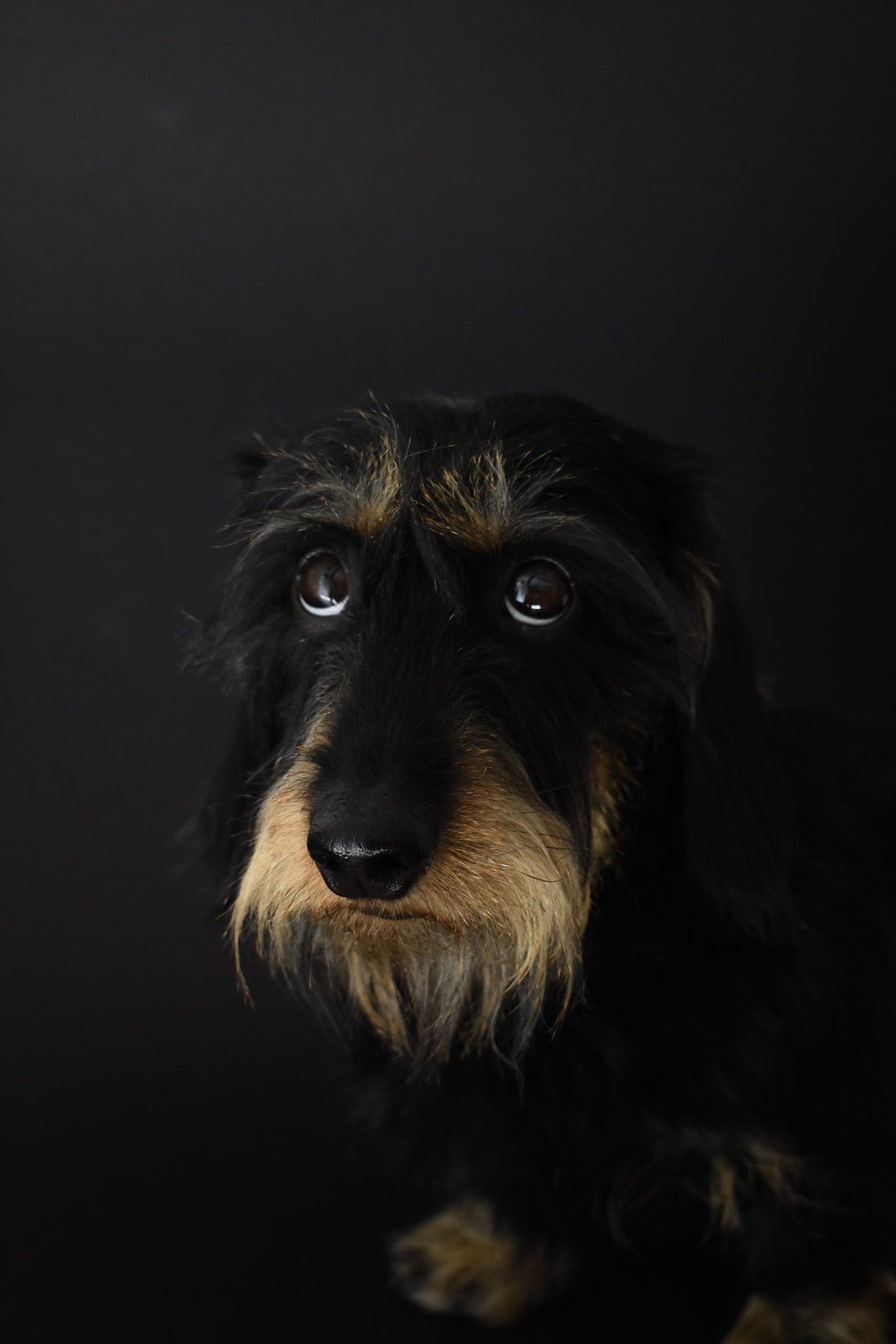 long-coated-black-dog-1557178.jpg