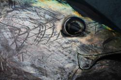 Bluefin tuna close-up, North Sea