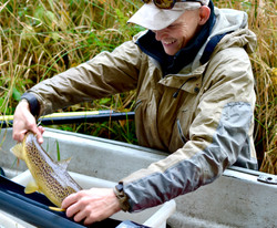 Sea trout being measured, River Villestr