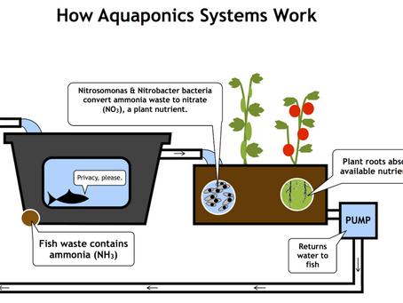 Minarets Introduces an Aquaponics System