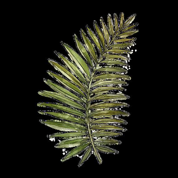 palm_leaf1.png