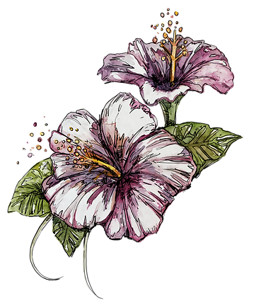 double_hibiscis.png