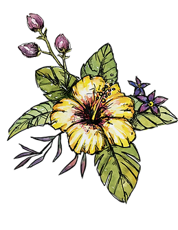 hibiscus11.png