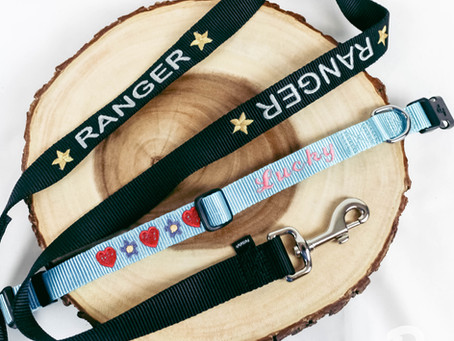 Embroidered Pet Collar and Leash