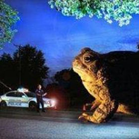 giant toad.jpg