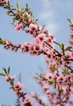 Gassi gehn, Blüten sehn, Liebe finden