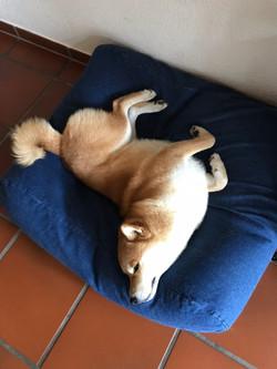 It's quite comfy...