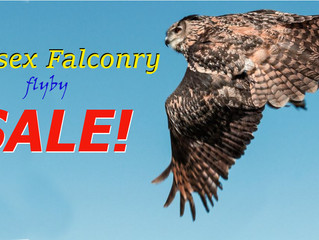 Flyby Sale