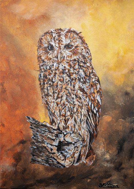 Autumnal Tawny Owl