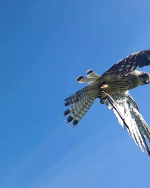 Join us for a Bird of Prey Experience you will never forget.  Buy your gift voucher online now and you will have your personalised voucher in your inbox in less than 24hrs. Ready to print out and give to your loved one this Christmas.  Vouchers can a