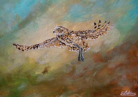 Burrowing Owl Taking Flight- Original