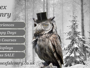 Christmas Is a HOOT with Sussex Falconry